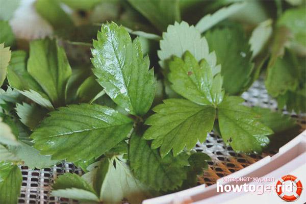 Рецепты с листьями земляники