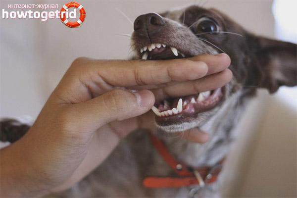Действия при укусе бешеной собакой