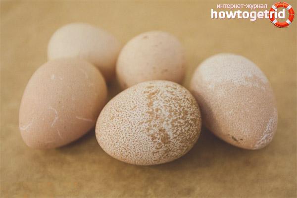 Лечебные свойства яиц цесарки