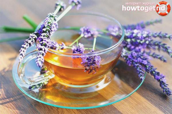 Польза лавандового чая